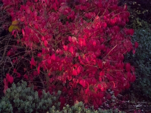 pink red leaves 1