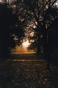 sunlight & trees