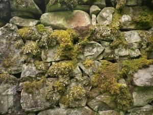 moss drystone wall
